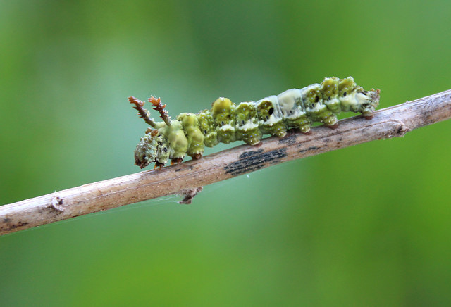Caterpillar Wrangling by Jeff Tome