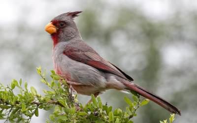 Audubon Announces 2019 Nature Photo Contest Winners and  Exhibit