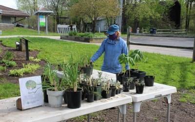 Audubon Plant Exchange and Sale Through Monday, June 1