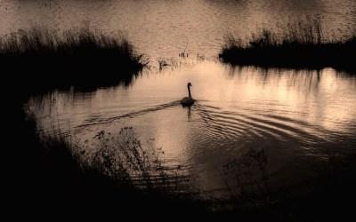 Audubon Nature Photography Contest Accepting Entries