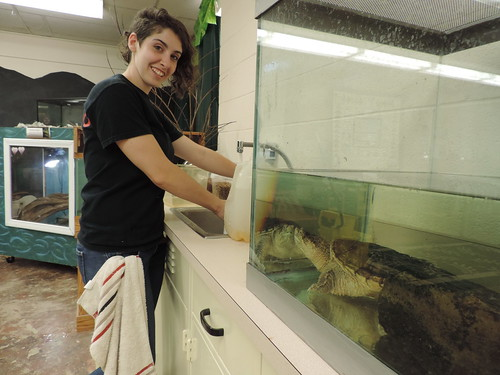 Learn About Being an Audubon Animal Care Volunteer, Thursday, June 17