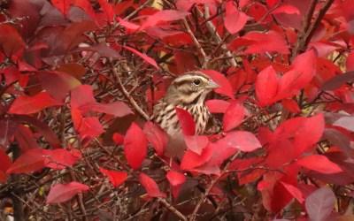 Autumn's Balance