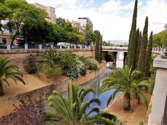 Palmen in Palma de Mallorca