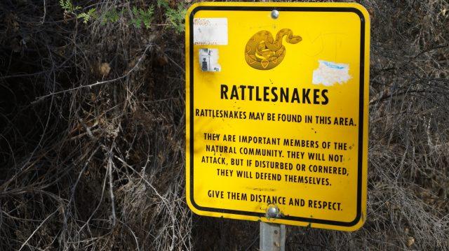 Rattlesnakes Arizona