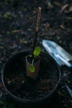 02-2 Zero Waste Gardening-12