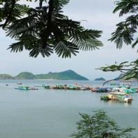 L'île de Cat Ba en Scooter : Infos & Conseils