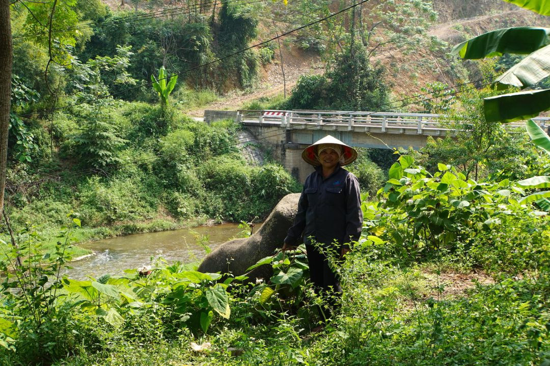 vietnam-buffle