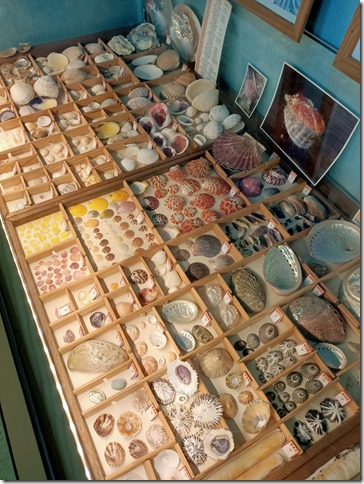 museecoquillages4