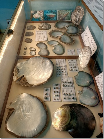museecoquillages5