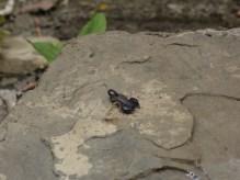 Skorpione unter jedem Stein