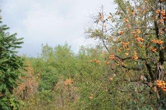 Khaki-Baum