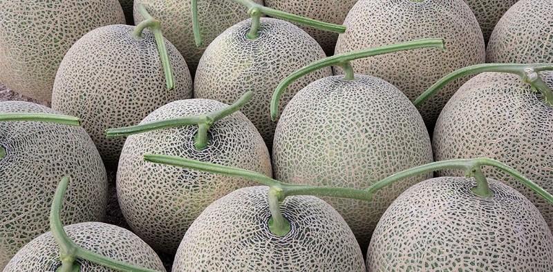 melon-de-yubari