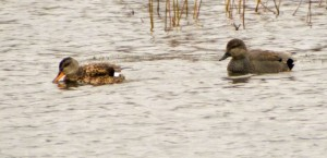 Bird Watching 2016-03-08 Brockholes