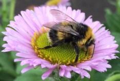gardening-bee on flower