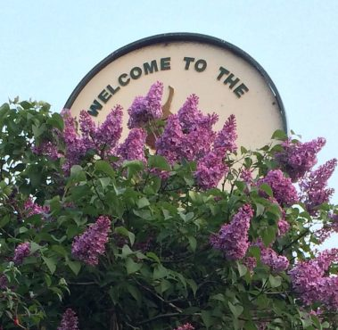This Lilac Bush with its own special Welcome sign! Captured by Alan N