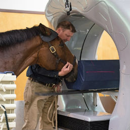 James Brown, clinical assistant professor of equine surgery, guides a horse into the new Pegaso High-Definition CT scanner at the Marion duPont Scott Equine Medical Center in Leesburg, Virginia.