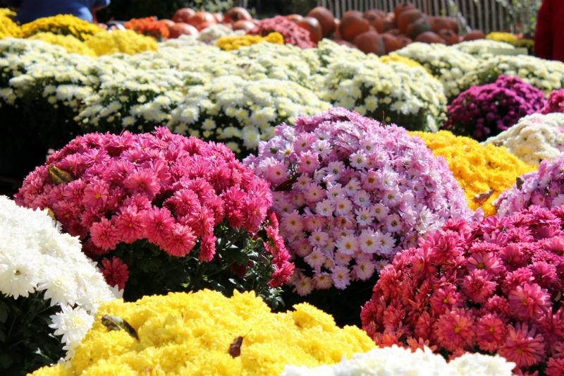 Top 10 Feel Good Flowers