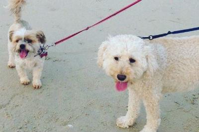 dogs virginia beach