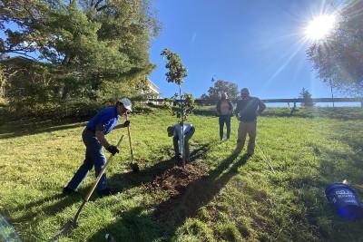 Staunton Tree Legacy Project