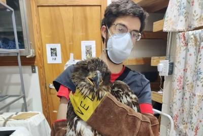 wildlife center bald eagle