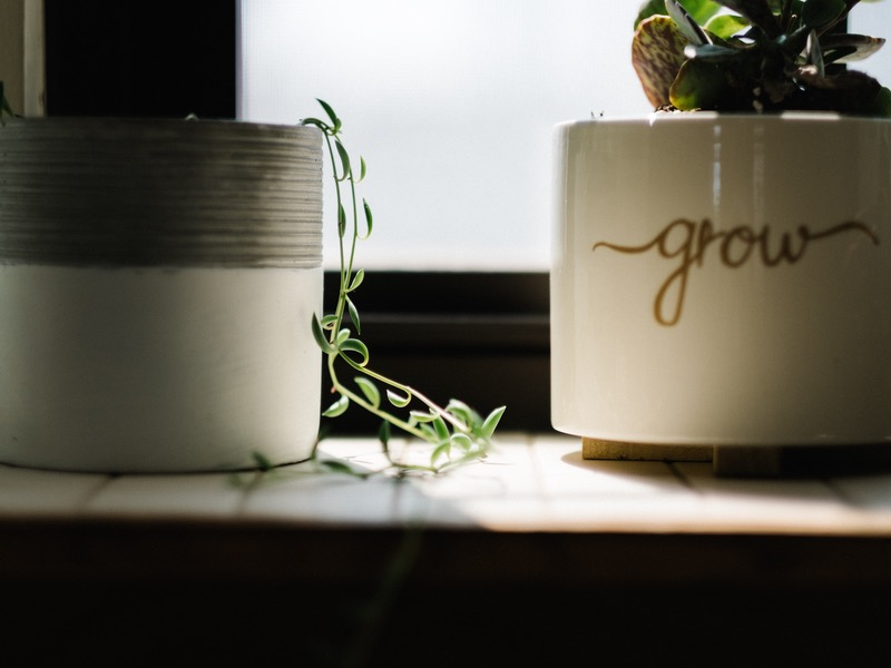 grow vine
