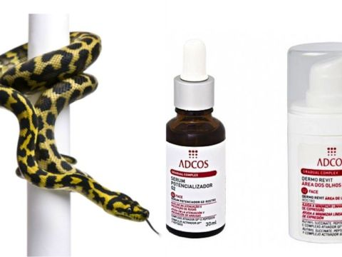 antidoto e fase de exposição ao toxicante