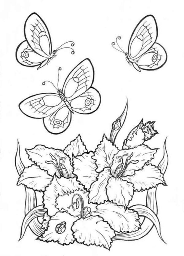 Раскраски Бабочки на цветах - детские раскраски ...