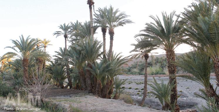 oasis-Ouarzazzate-Maroc
