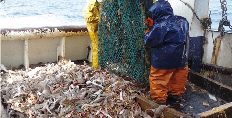 Pêche maritime : Vers un nouveau repositionnement du port d'Agadir