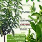 Propiedades y beneficios de la stevia. Infografía