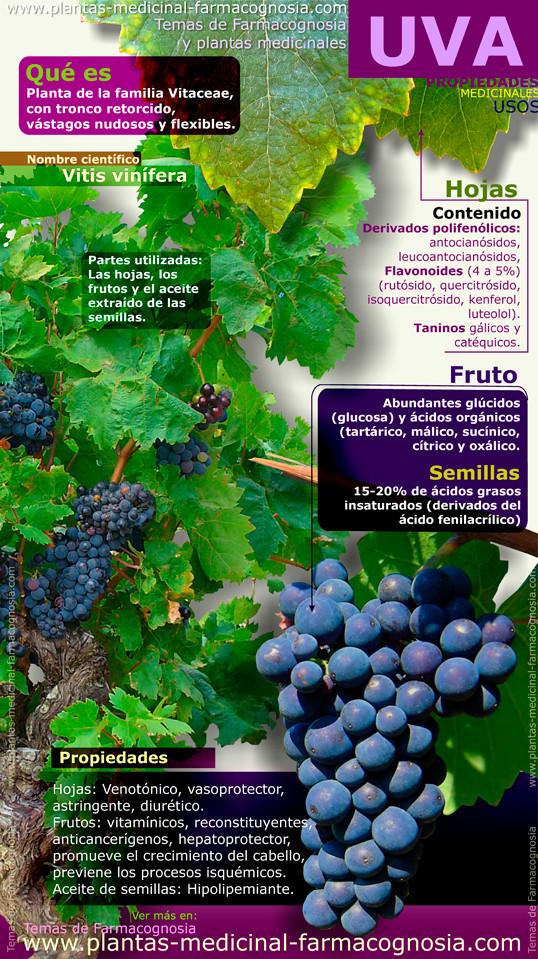 Propiedades y beneficios de la uva. Infografía