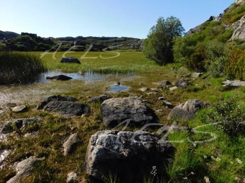 Orillas de la turbera de la Roya sin apenas agua