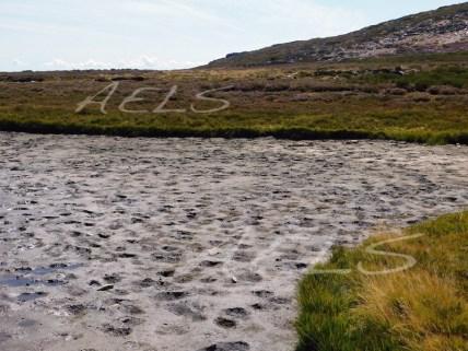 Lado oeste de la laguna, seca y con el sedimento del fondo de la cubeta al aire