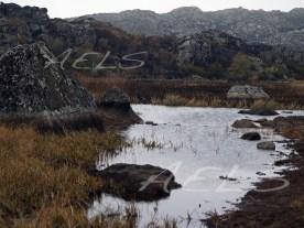 20 de octubre de 2005. Vegetación palustre quemada cuando el incendió entró dentro del ecosistema acuático seco.