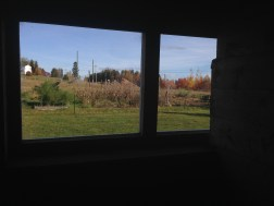 New barn window (from inside a stall)