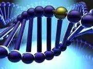 Enhance Optimizes DNA Function