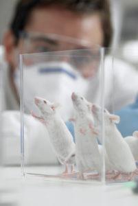 lab-mice2
