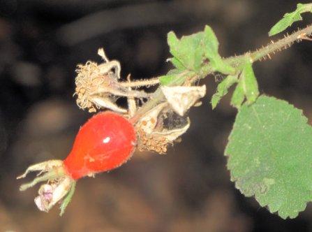 Sespe Ant 09-10 (14)