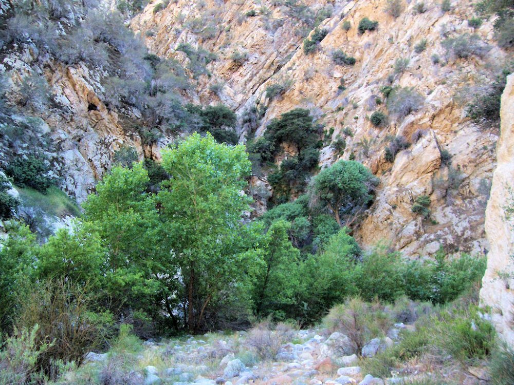 Piru creek 4-17-13 (9)