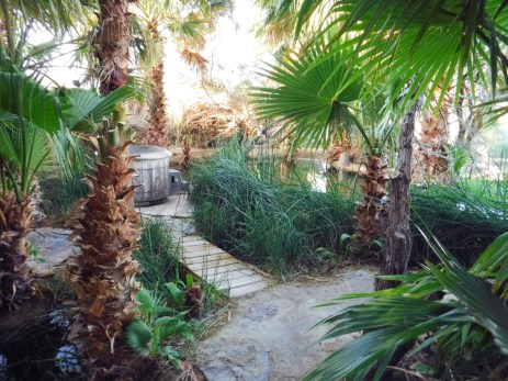 Inside the oasis