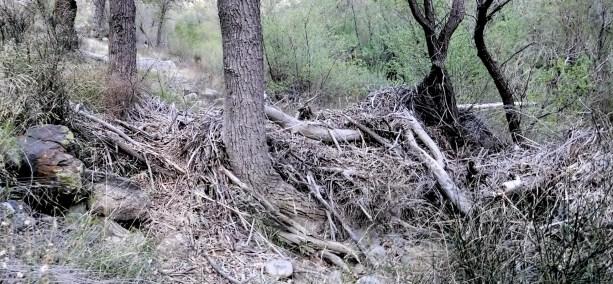 Piru Creek debris