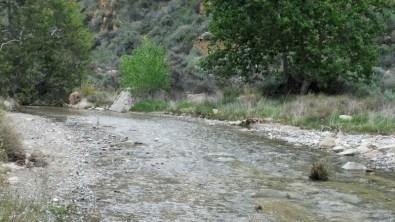 Fish Creek at a wide spot