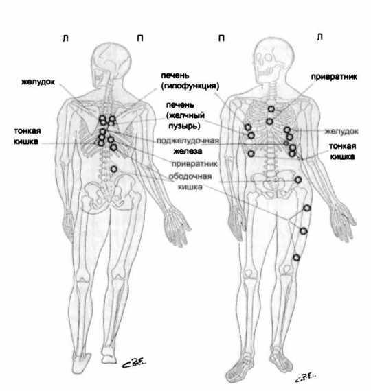 Рис. 39. Точки Чэпмена — желудочно-кишечная группа (по R. Perronneaud-Ferre, 1999)