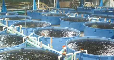 poisson élevage bassins