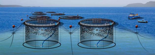 élevage de poissons