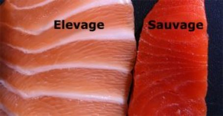 saumon sauvage vs élevage
