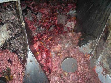 Rendering meat