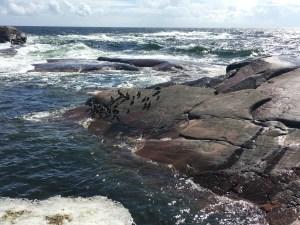 Bengtskär, majakka, meri, Hanko