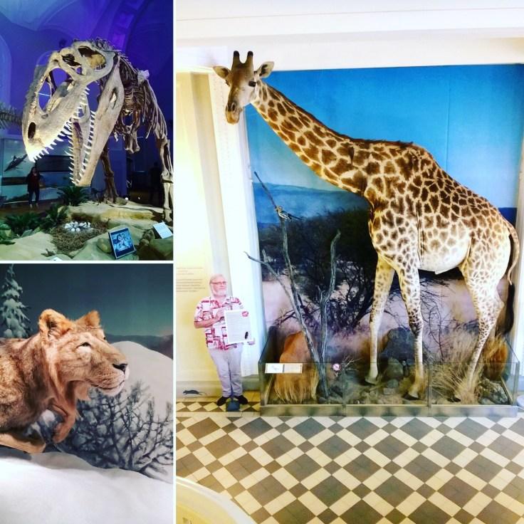 IMG_0530, museot, luonnontieteellinen museo, museokortti, lumo, visit Helsinki, lasten kanssa