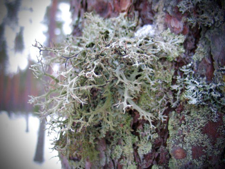 Metsä, Teijon kansallispuisto